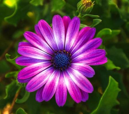 Purple-Flowers-119