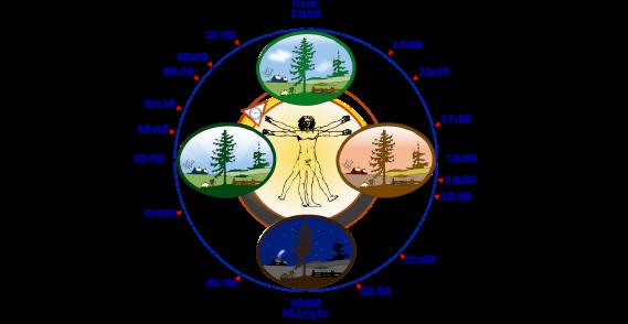 2000px-Biological_clock_human.svg